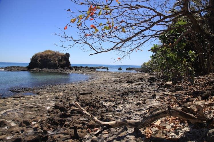 Leafy beach in Madagascar