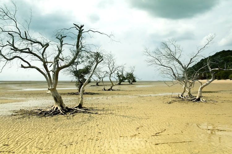 Trees in a dry wetland