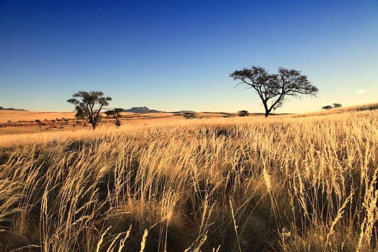 Namibian grass plains