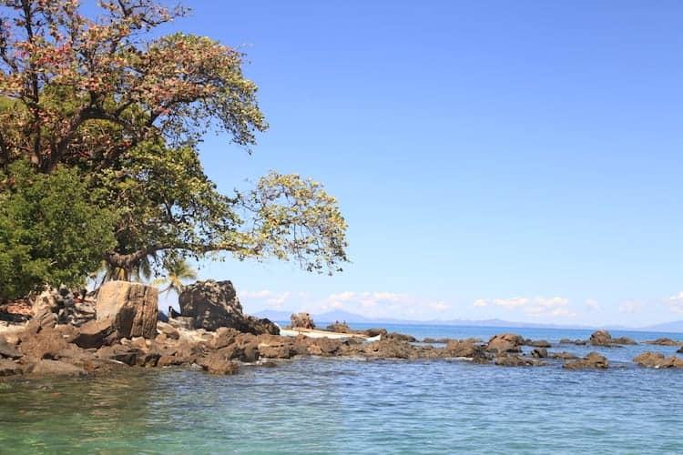 Tree next to the ocean