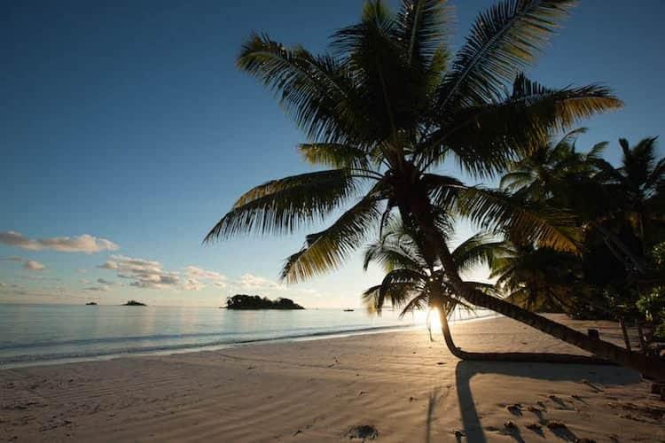 Sunset through a palm tree on a beach