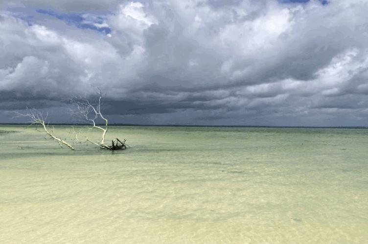 Tree skeleton in the ocean under storm clouds