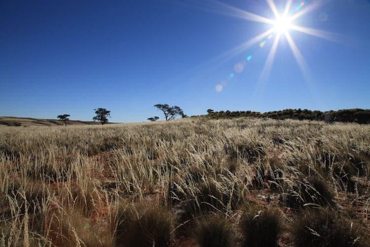 Sun shining on grass plains