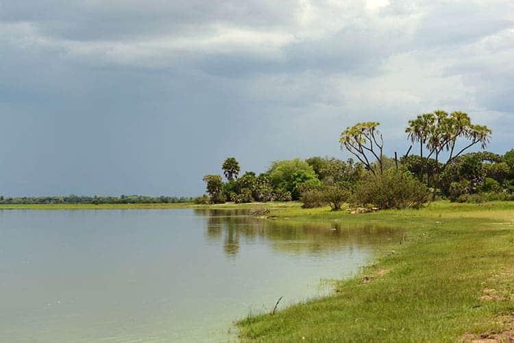 Lush wetland, Tanzania