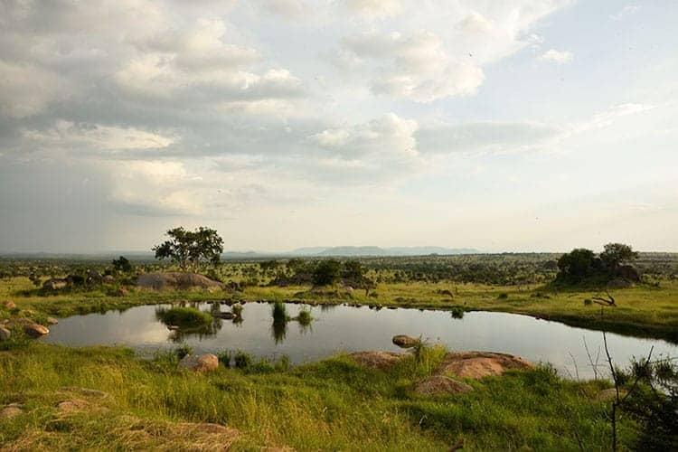 Waterhole, Tanzania