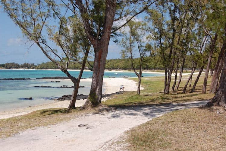 Trees next to a beach in Mauritius