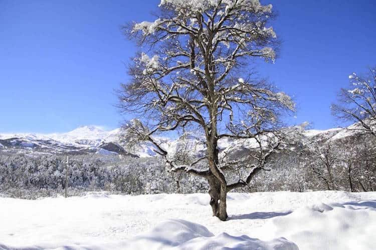 Snow covered tree, Chile