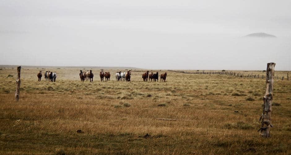 Wild horses running, Chile