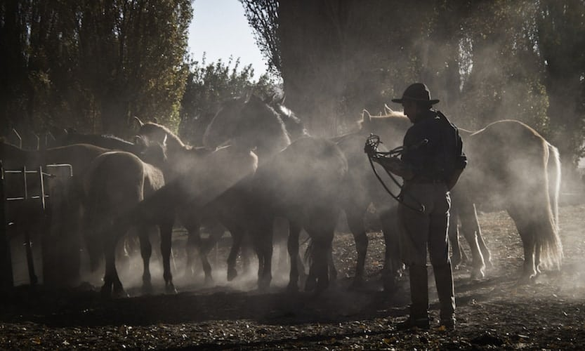 Man with horses, Chile